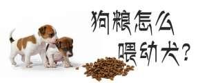 狗粮怎么喂幼犬